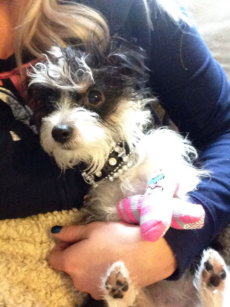 Betsey Johnson the pup!