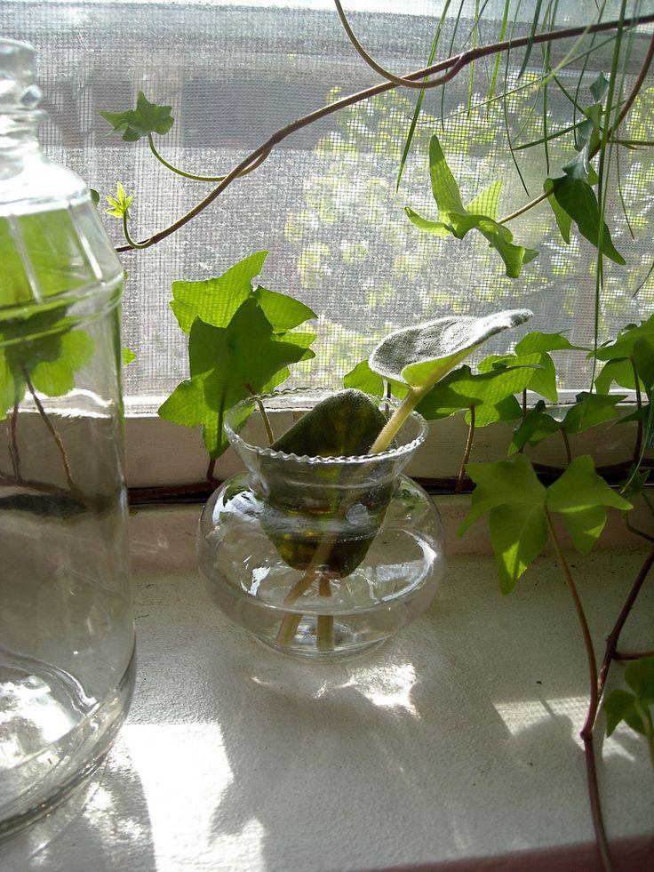 Indoor water garden growing plants in water year round for Low water indoor plants