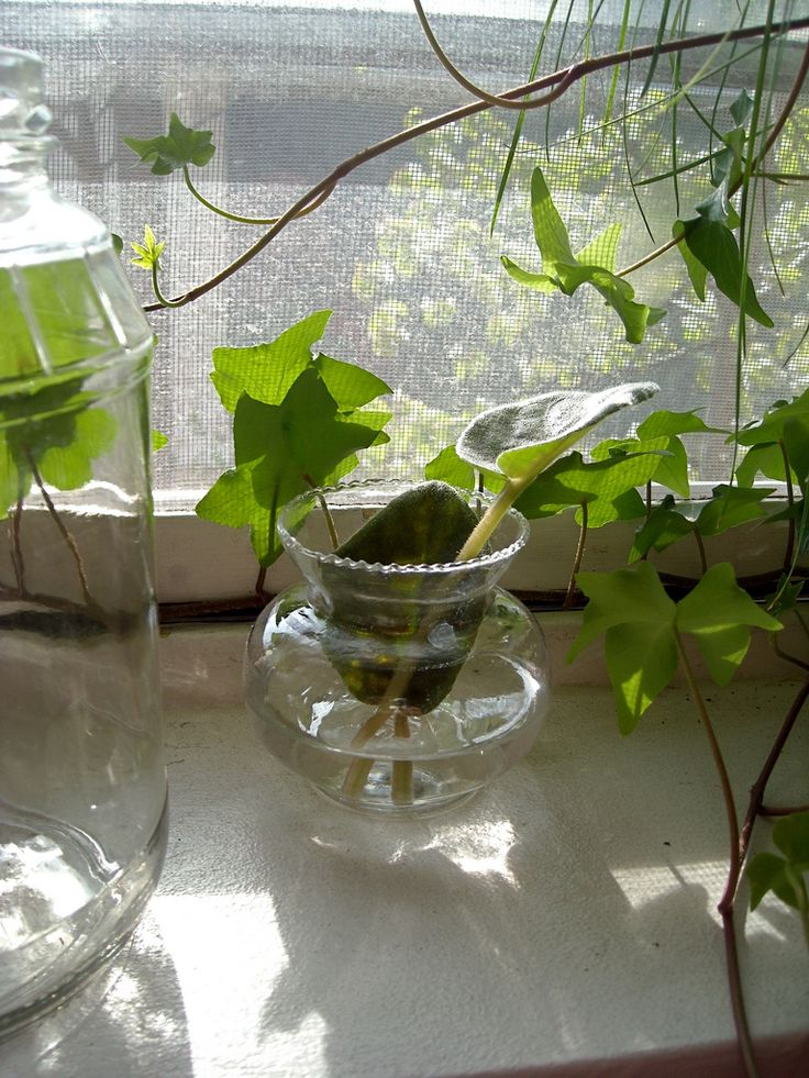Indoor Water Garden – Growing Plants In Water Year Round ...