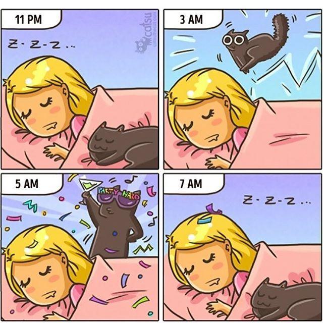 Me... every night!!! 😻😹🎆🍾✨🐾🎈🎉