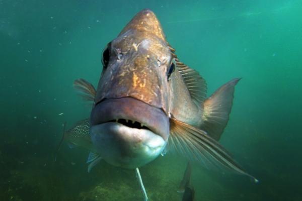 Snapper cuts first. http://www.stuff.co.nz/waikato-times/news/snapper-review/9051674/Its-a-fish-fight