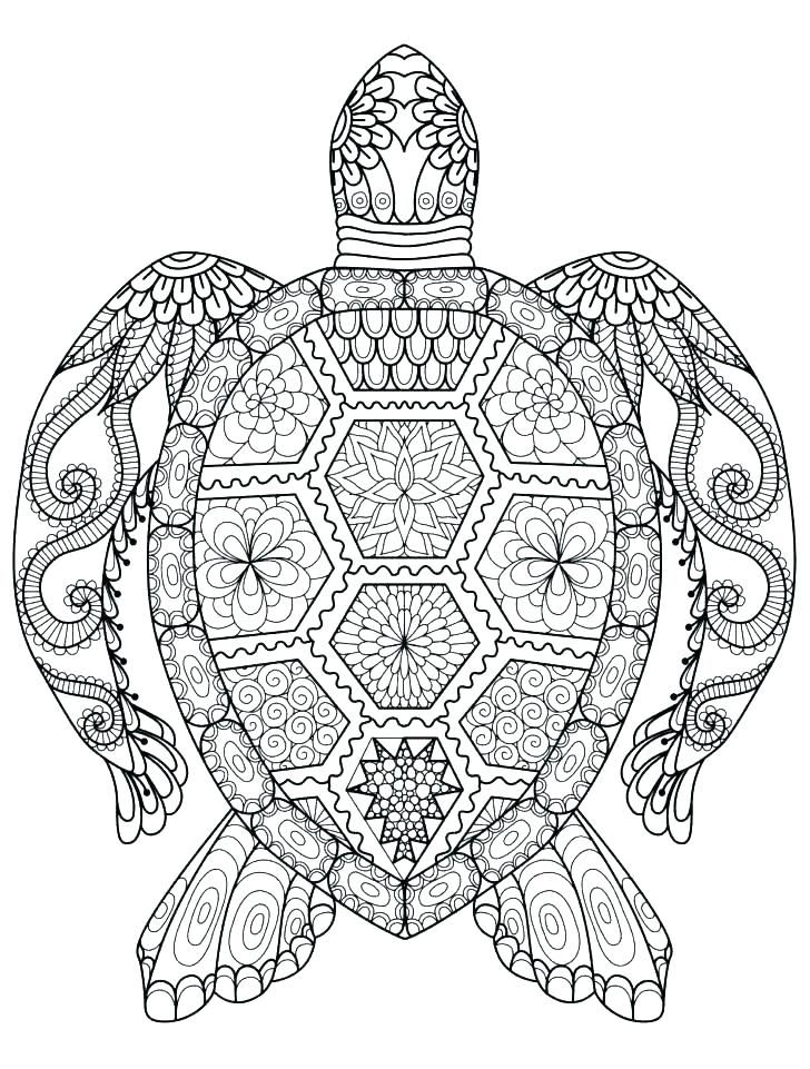 Simple Turtle Coloring Pages Ideas For Kids Turtle Coloring Pages