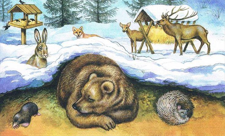 Zwierzęta i ptaki zimą pomoc, dokarmianie - zwierzęta zimą1.jpg