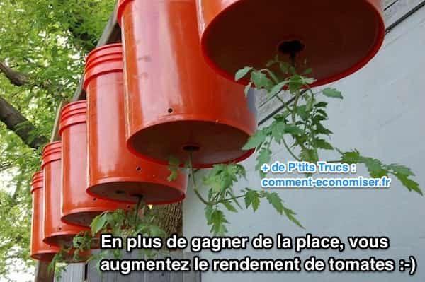 Tomate cultivées dans seaux suspendus