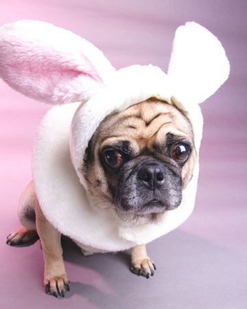 Cute photos of pets dressed in Easter-themed costumes