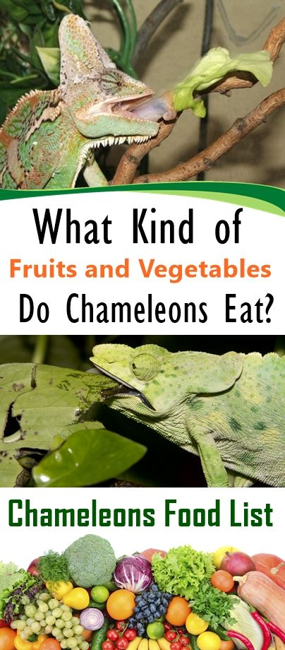 What Type of Fruits and Greens Do Chameleons Eat?