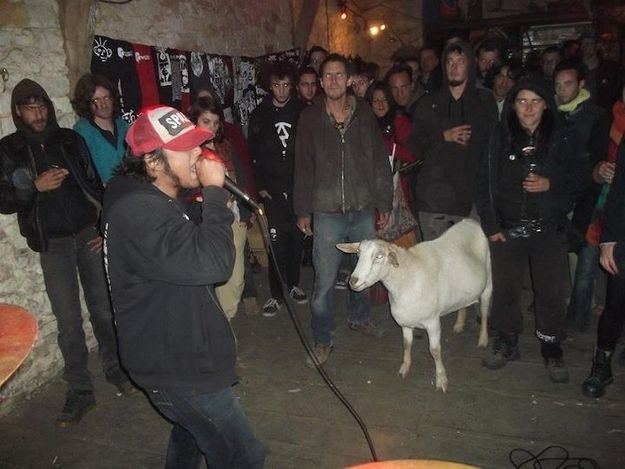 Punk Rock Goat