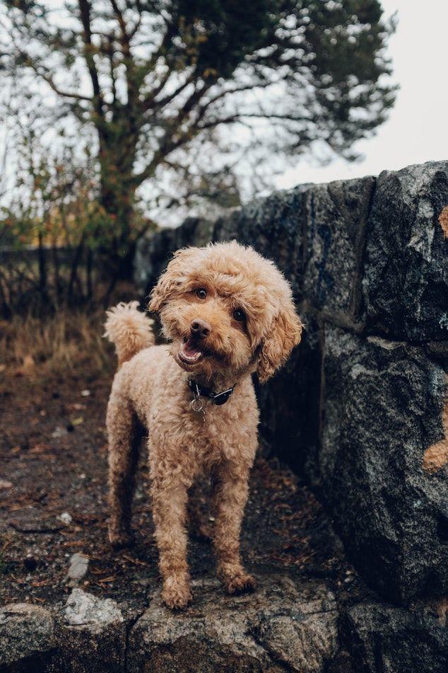Regenipet Friendly Dog Breeds Family Friendly Dogs Dog Breeds