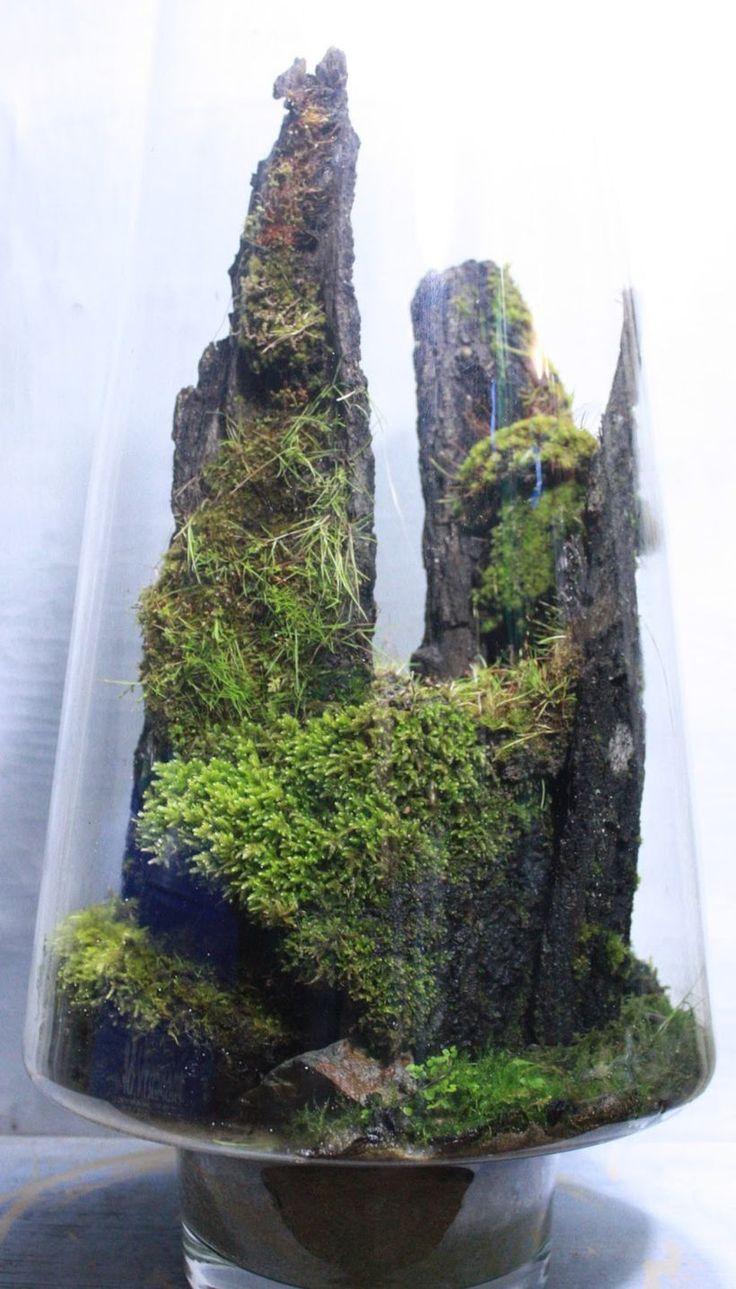 best under glass images on pinterest inside garden plants and