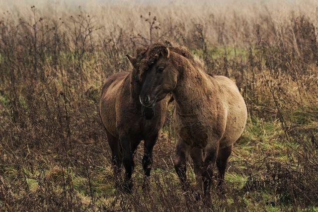 Animals in Loo, Netherlands (horses loowaard) - a photo by gerjan