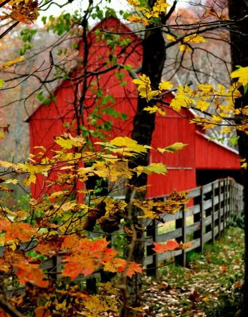 .: Fall Beautiful, Fall Leaves, Autumn Leaves, New England, Fall Colors, Beautiful Barns, Autumn Barns, Red Barns, Old Barns