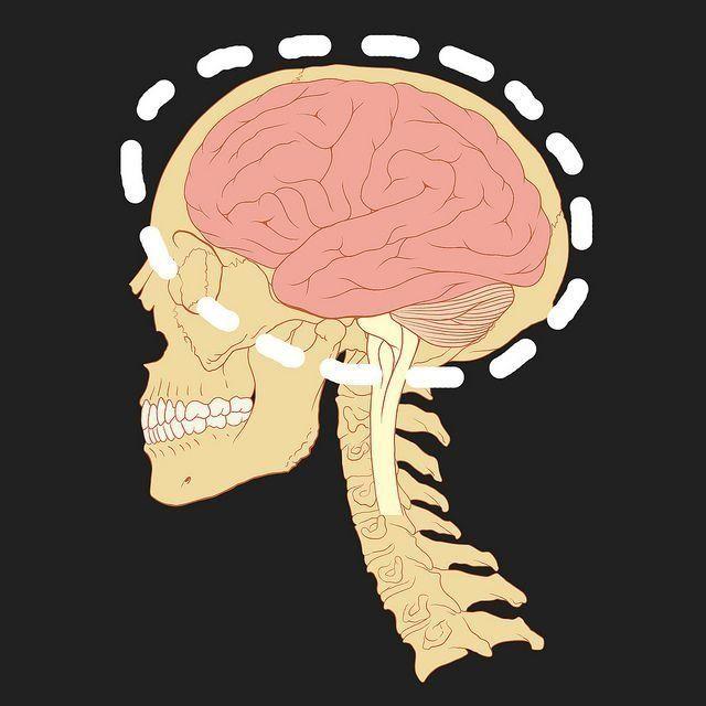 partes y funciones del cerebro humano