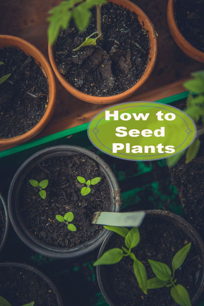 Learn How To Seed Plants At Home Spring Plants Garden Seeds