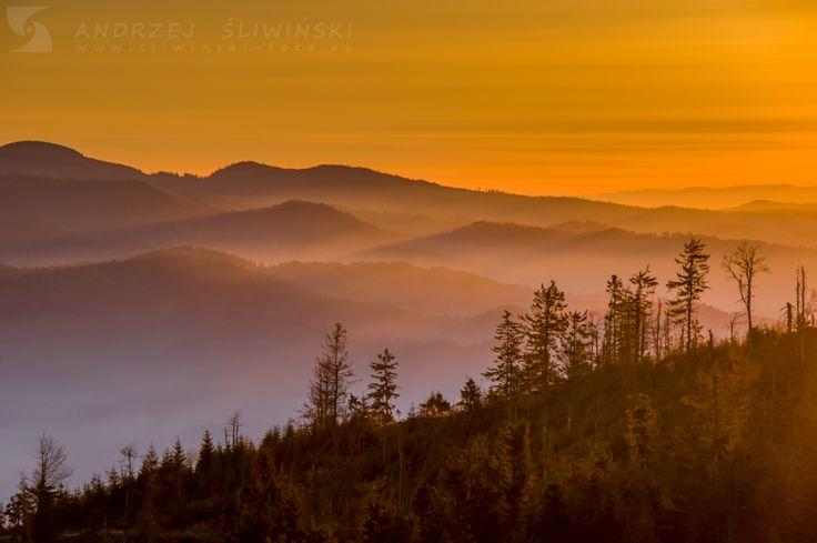 Golden morning in Gorce Mountains.