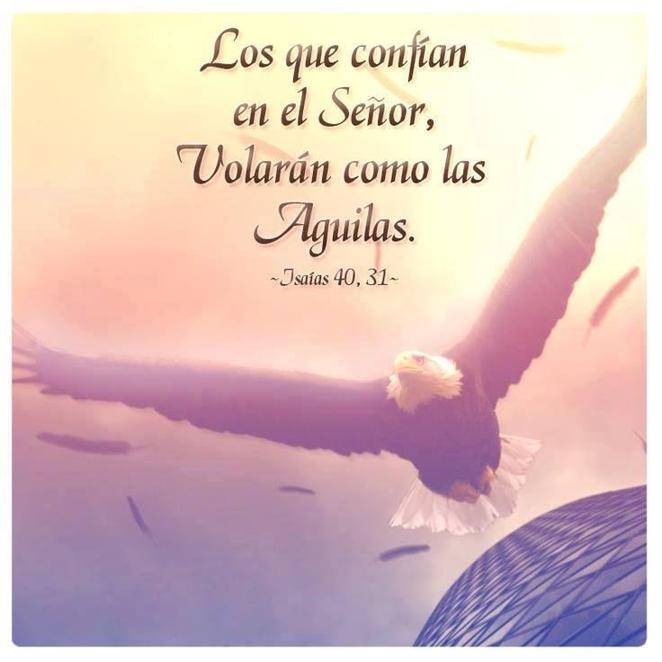Los que confían en el Señor, volarán como las águilas. Is 40.31