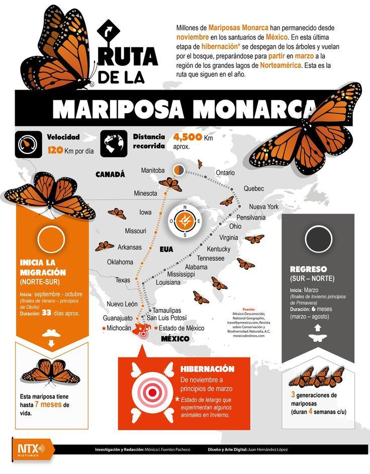 24 best Spanish - Mariposa Monarca images on Pinterest | Monarch ...