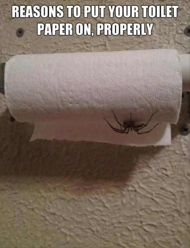 """I just changed the way that is """"right"""" for toilet paper..."""