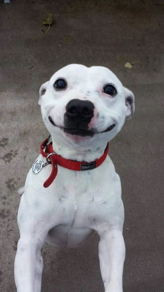 """People who say """"dogs don't smile"""" or look at me funny when I mention my #dog smi…"""