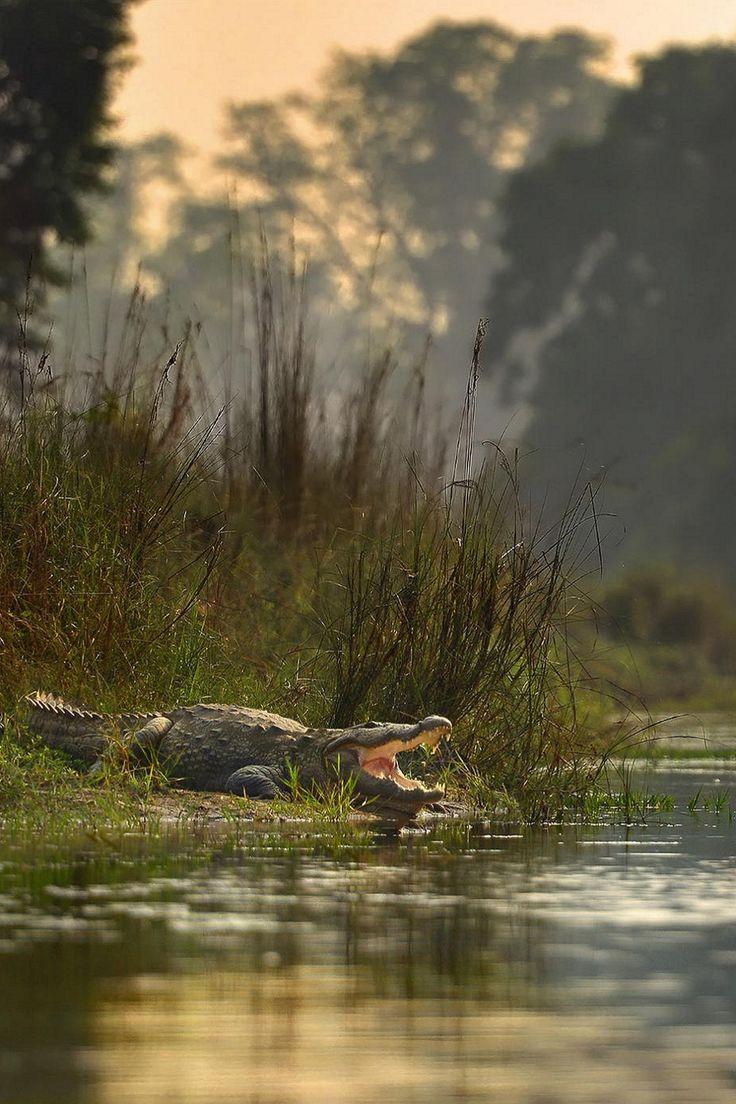 "Crocodile: ""On The Edge."""