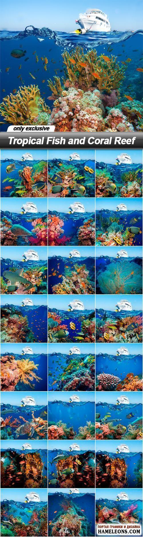 Морские растровые фоны: пароход, коралловые рифы, рыбы | Tropical Fish and Coral Reef