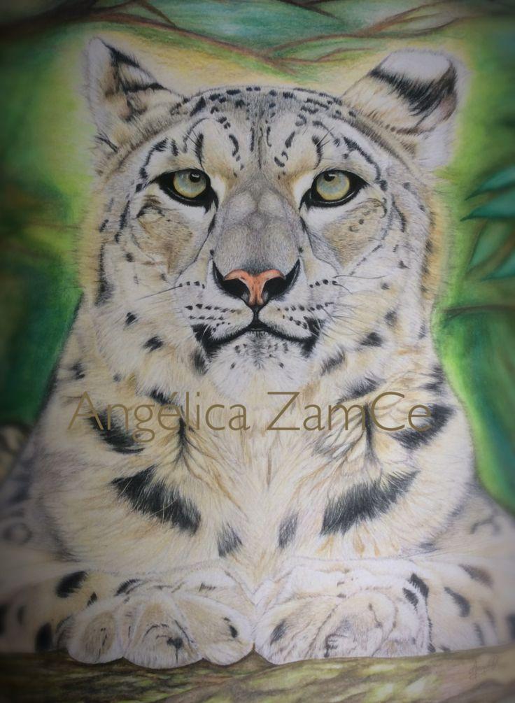 Leopardo de las nieves. Snowleopard. Ilustración en lápices de colores. Colored pencils illustration.