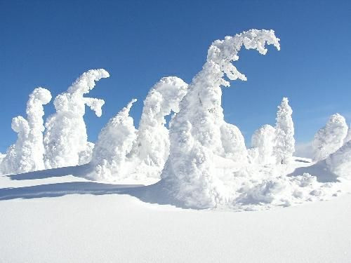 This was, hands down, my favorite vacation spot. I can't wait to go back! Snow Ghosts at Big White Ski Resort, Kelowna, B.C.