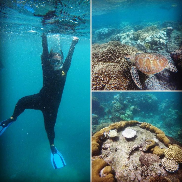 Had the best last day in Oz exploring the Great Barrier Reef! Met the cast of finding nemo including crush  #snorkelling #cairns #greatbarrierreef #Australia #travelling #incredible by chloe1594 http://ift.tt/1UokkV2