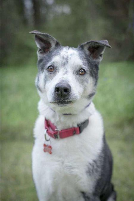 Dogs For Adoption Near Madison Wi Petfinder Dog Adoption