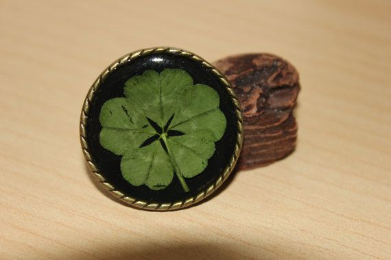 Hey, I found this really awesome Etsy listing at https://www.etsy.com/listing/192464786/real-five-leaf-clover-pin-shamrock