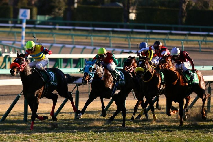horses in japan