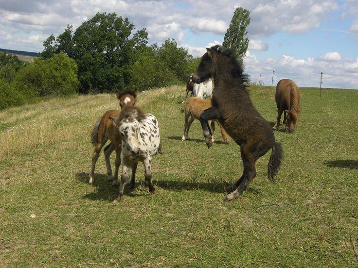 ponys | Süße Miniponys vollem Papier Pferde Ponys Kleinpferde