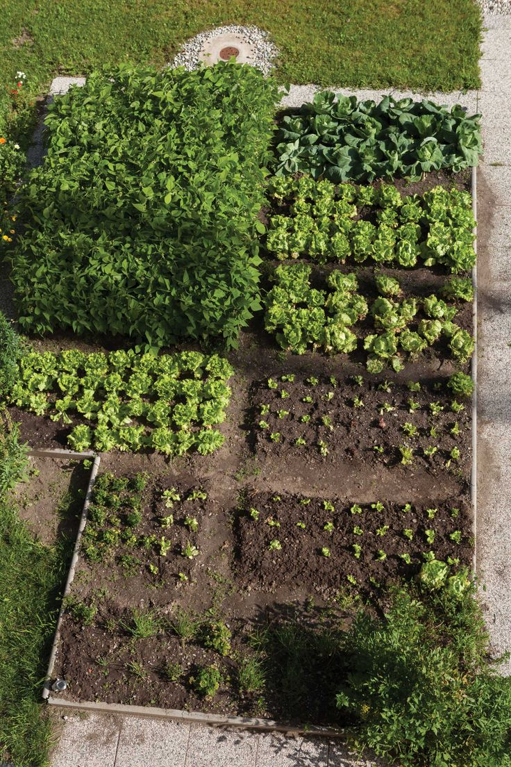 Rotating Crops In Raised Beds