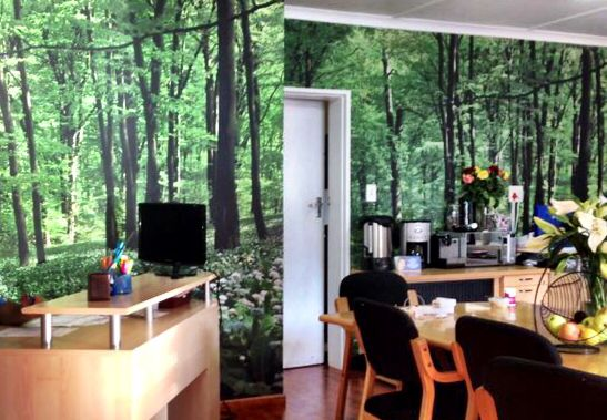 Forest Wallpaper in Office