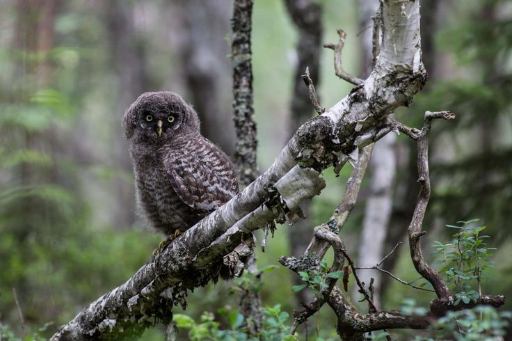 Norwegian Expedition offers nature trips and various workshops in the Elverum…