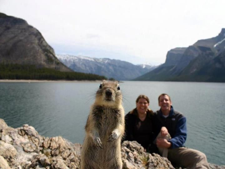 Funny Animals, Funny Images: Photos, Laughing, Squirrels, Animal Photo, Funny, Pictures, Photo Bombs, Funnies, Photobombs