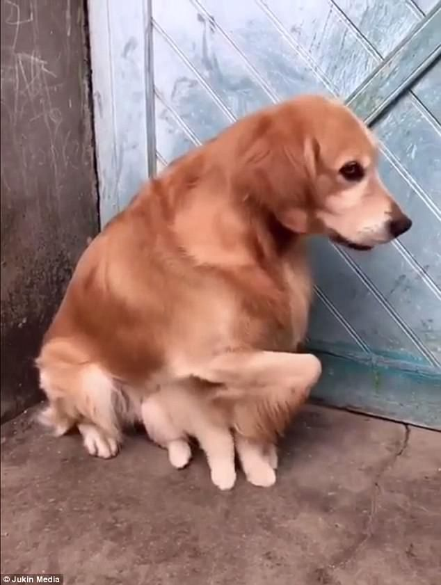 Adorable Video Shows Dog Protect Puppy From Real World Dogs