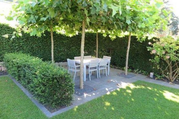 42 Amazing Ideas With Natural Pergolas In The Garden And How To Organize The Space Around The Trees Low Maintenance Garden Design Plane Tree Front Garden