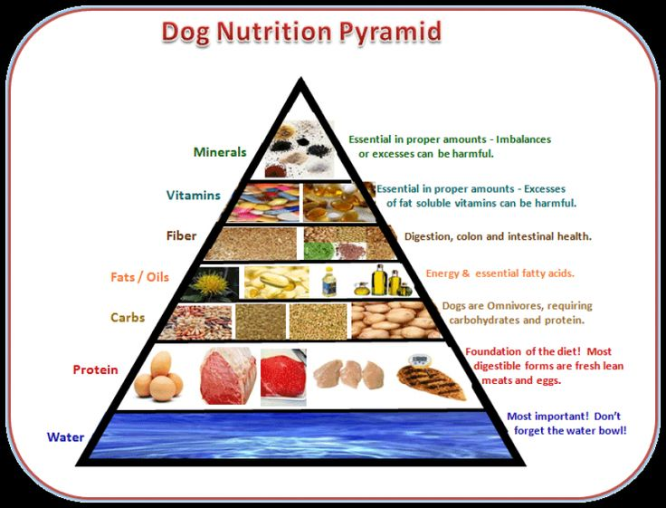 dog nutrition pyramid pet nutrition is more than just science diet and ...
