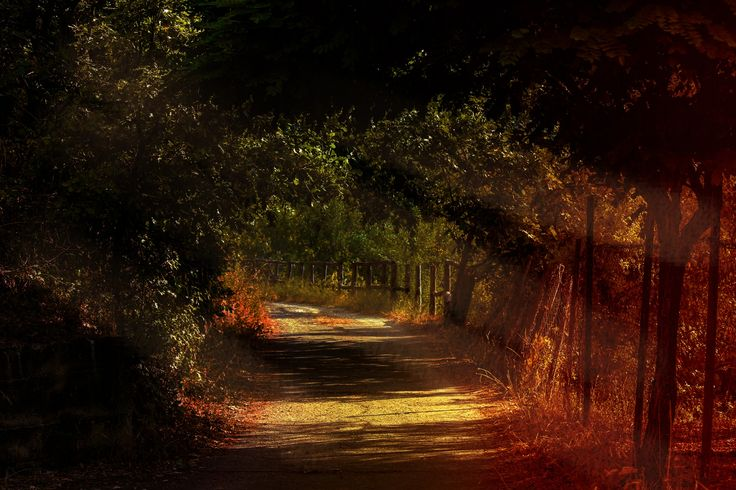 tunnel of trees by Mirella Molinari on 500px