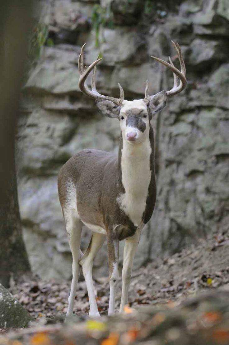 West Virginia Deer Farm. Photo by Jack Oliver II