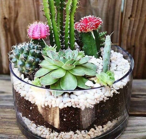 Cactus Terrarium | Terrarium Plants You'll Love For Your Homestead