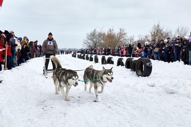 В Коротиче прошел Winter Dog Fest. На аэродроме «Коротич» состоялась первая олимпиада на собачьих упряжках. В выставке собак «Знакомство с породами» принимали участие собаки таких пород, как тибетские мастифы, кавказские овчарки, аляскинские маламуты, сибирские хаски, немецкие овчарки, эрдельтерьеры.