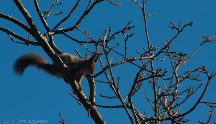 A squirrel at springtime