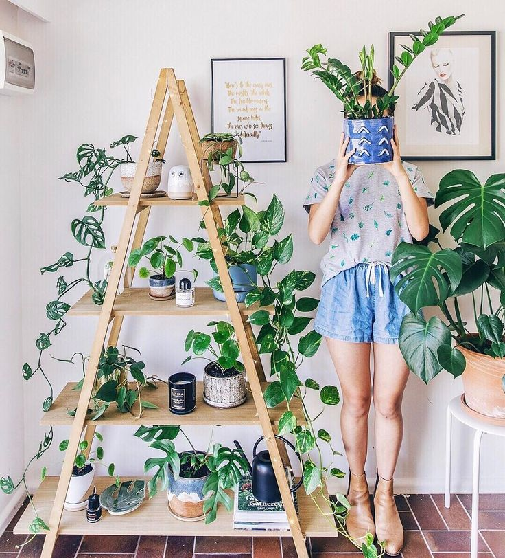 Save this to discover 27 plant lady Instagram accounts to follow for major indoor plant jungalow inspiration.