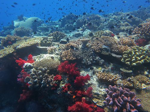 Diving- Fiji Coral Coast and Beqa Lagoon September 2013