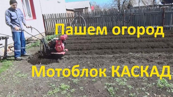 Вспашка огорода  мотоблоком Каскад