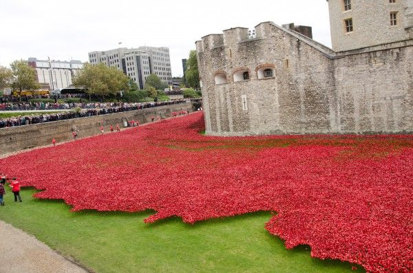 Sea of red poppies at the Tower of London
