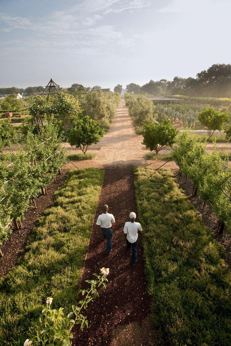 Walking through Babylonstoren's fresh produce gardens. #GourmetAfrica #foodie