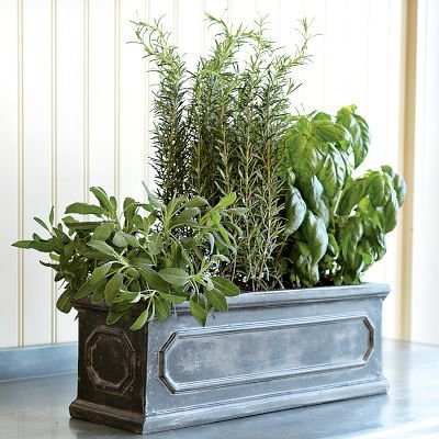 Top 25 Ideas About Indoor Herb Planters On Pinterest