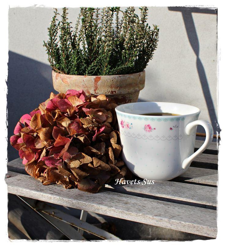 Havets Sus, Autumn, Fall, Efterår, My garden